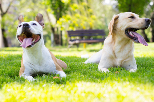 dogs smiling