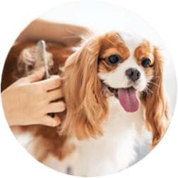 DOG GROOMING AND SPA