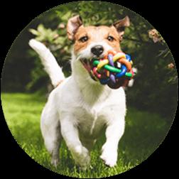 Pup Park Membership