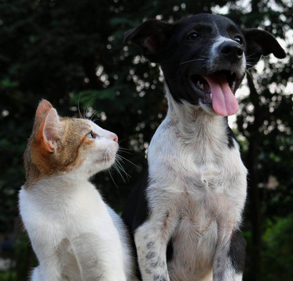 kitten looking at puppy