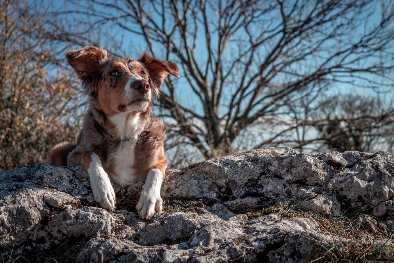 dog laying on rocks
